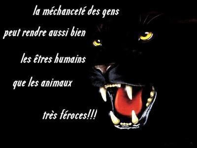 poeme ou citation