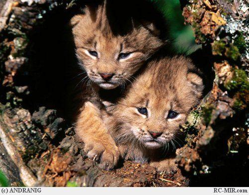 Les macs de la mignonnitude du règne animal Tnb2mg6o